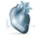 Factors Affecting Heart